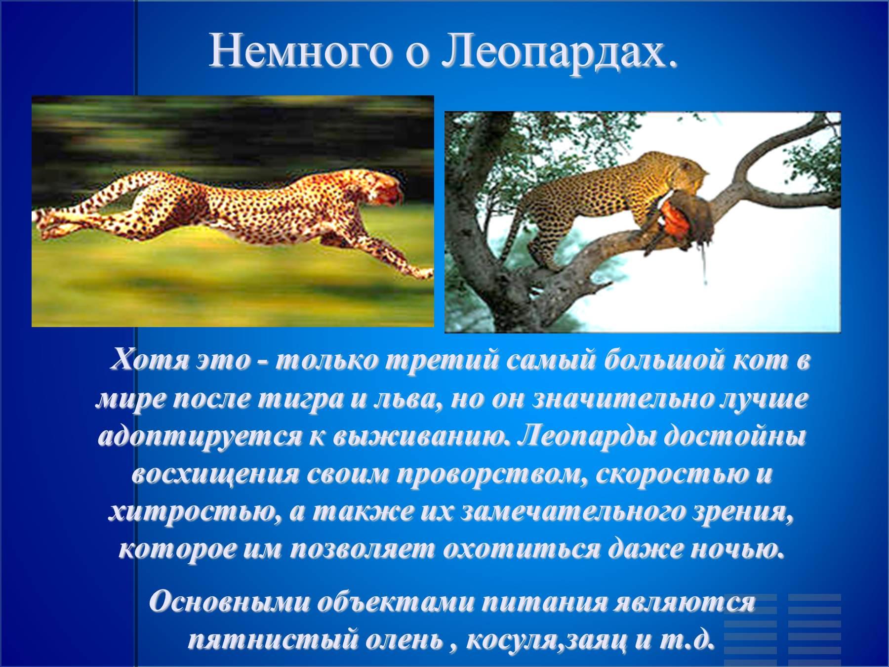 термобелье для красная книга о леопарде излишняя