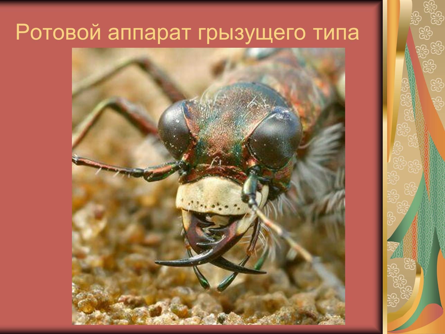 kolyushe-sosushiy-rotovoy-apparat-imeet