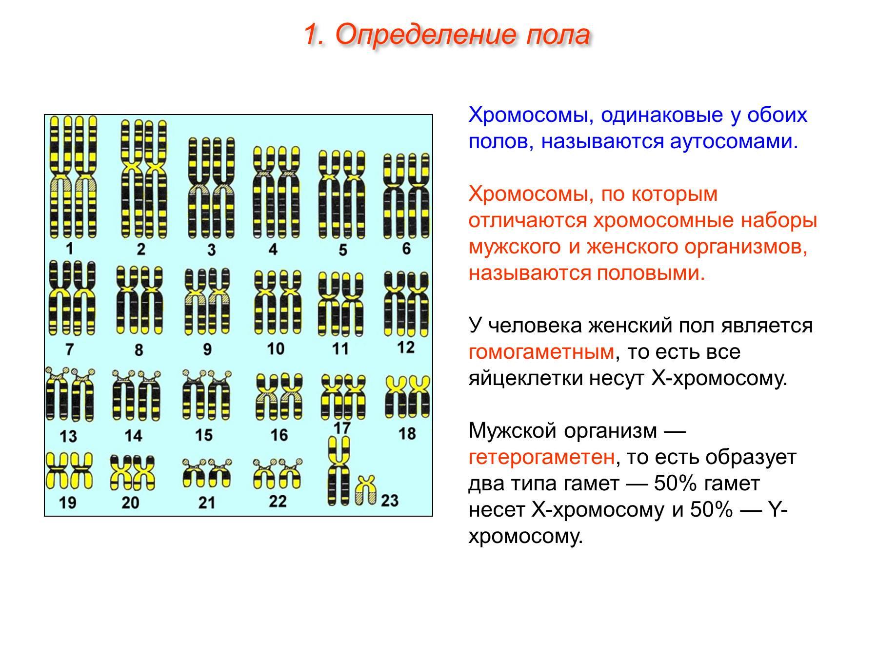 Схема хромосомы пол ребенка по