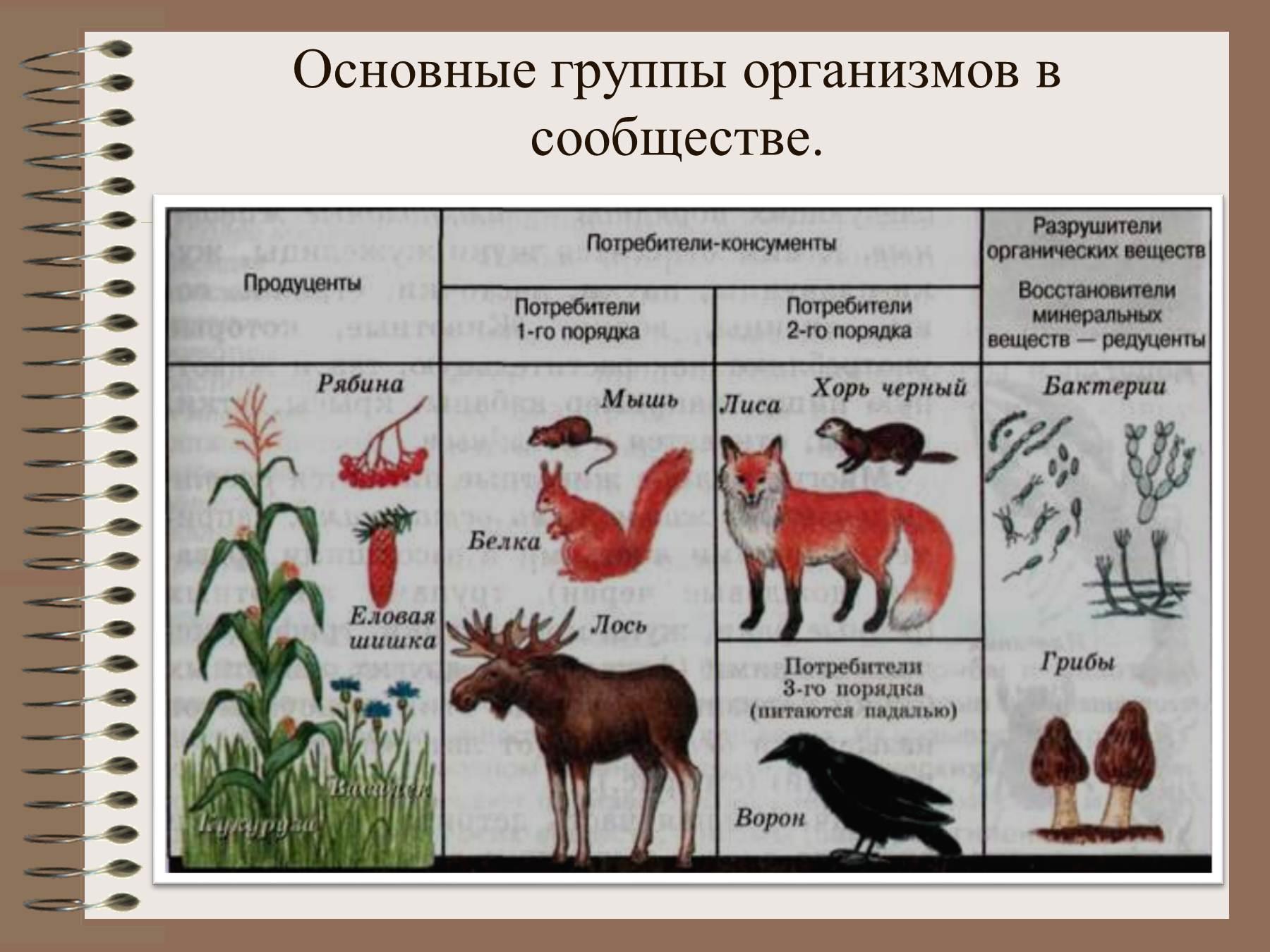 Рисунки природная экосистема взаимосвязи растения животных и грибы 5