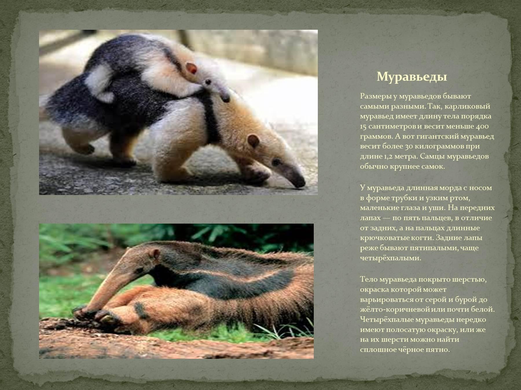 презентация нв тему природные зоны южной америки.