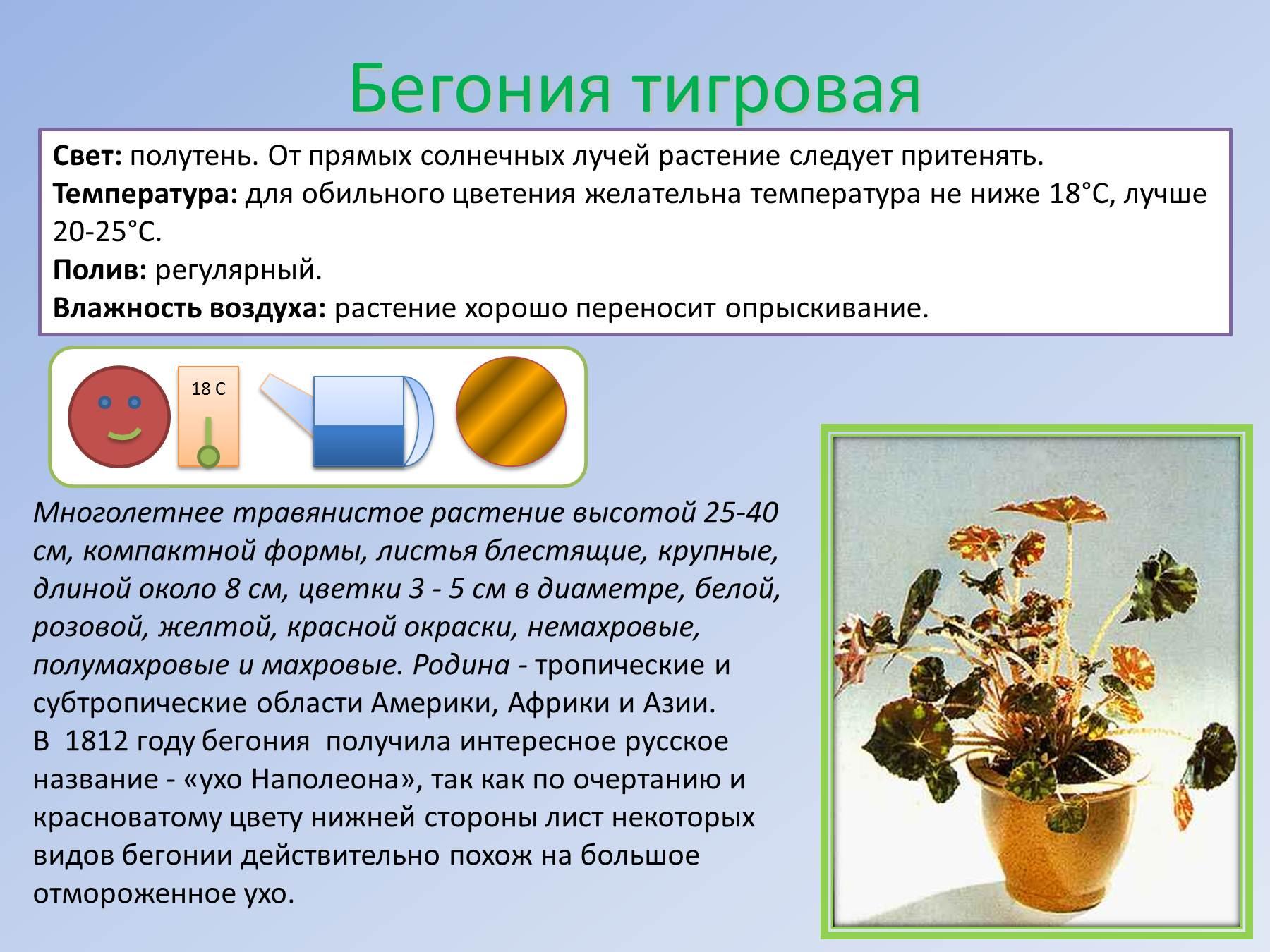 Схемы ухода за комнатными растениями детского сада