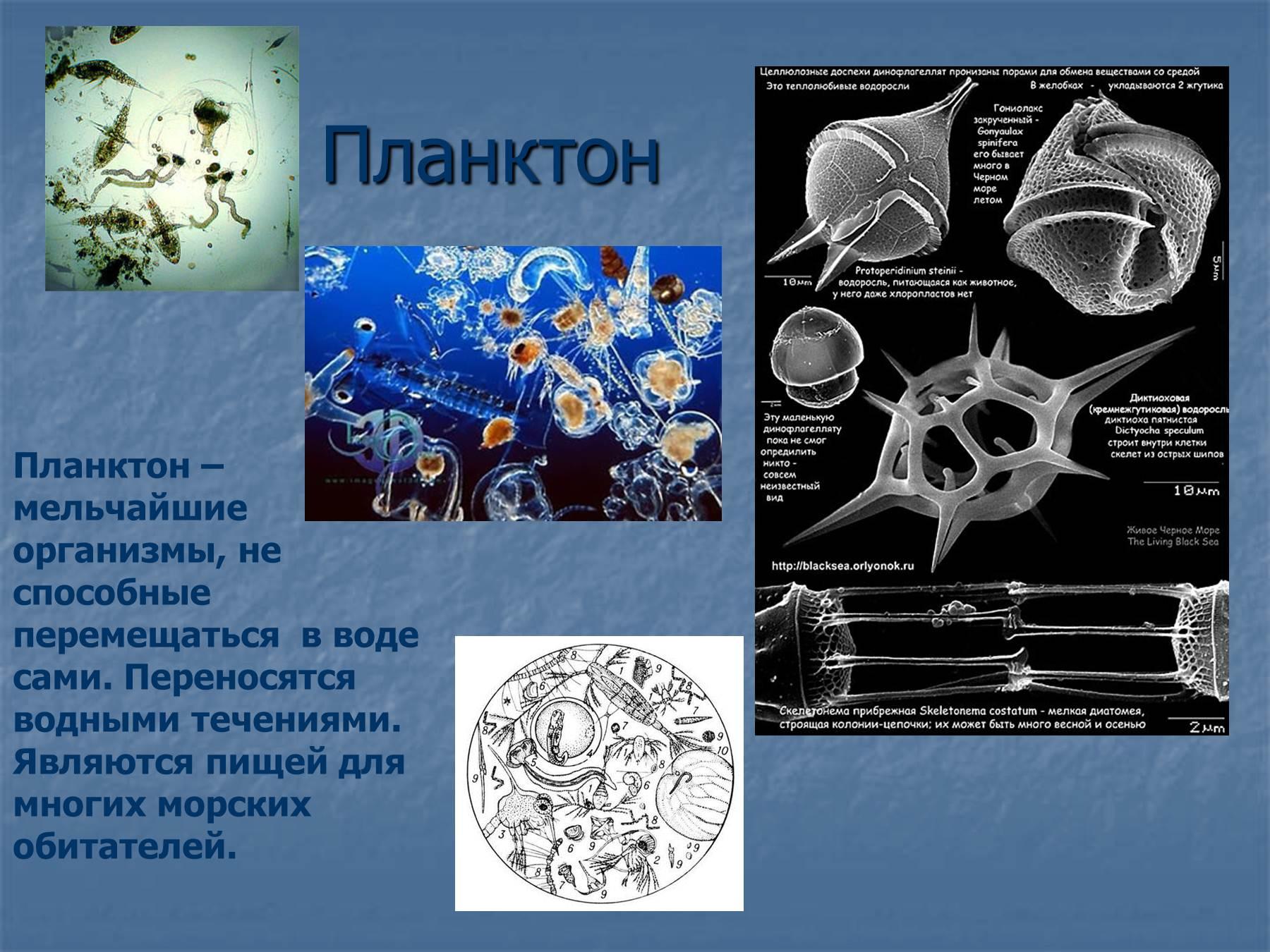 Цветы из шаров картинки 166