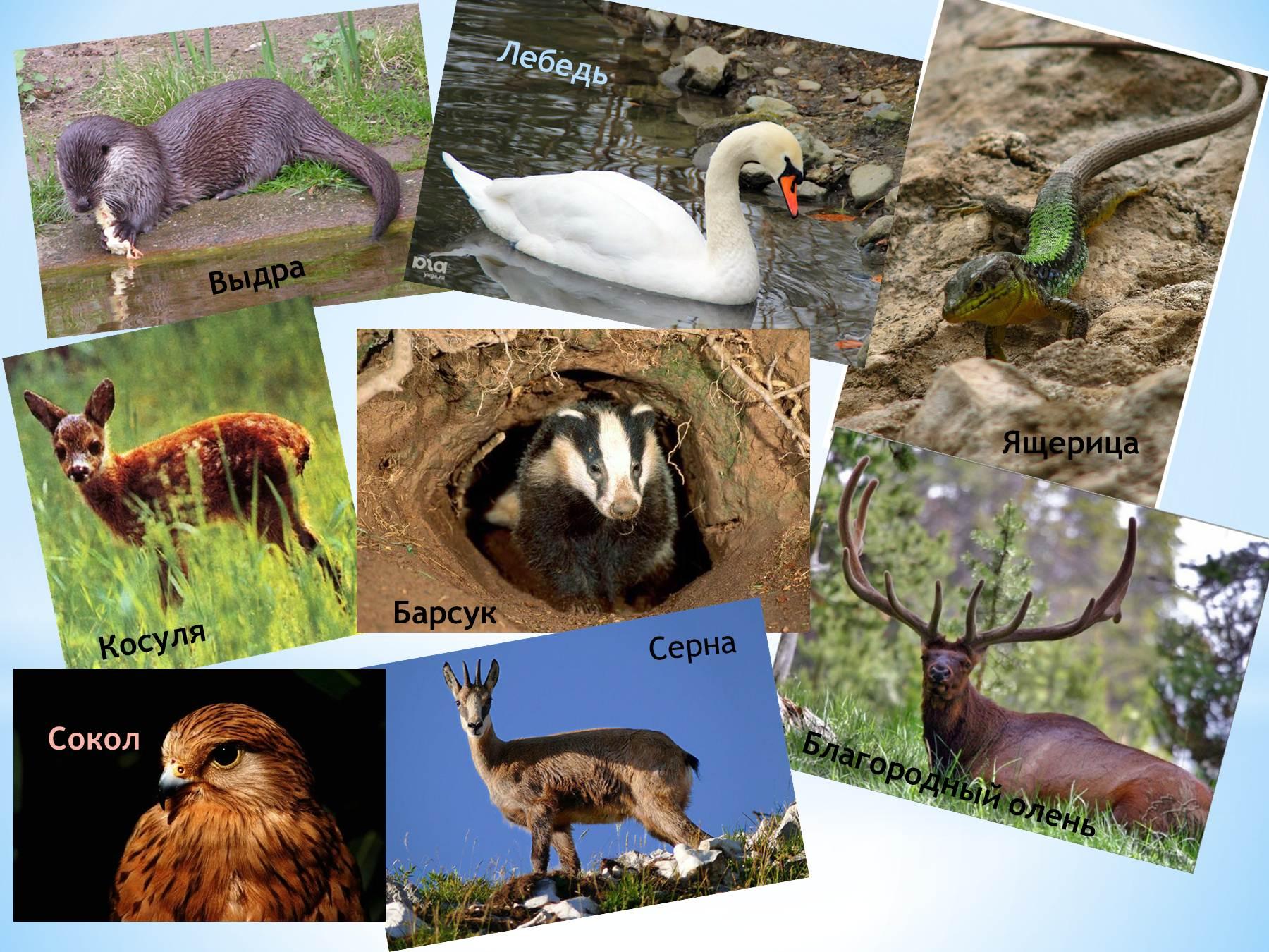 Скачать бесплатно фото животных и птиц кавказского заповедника 7