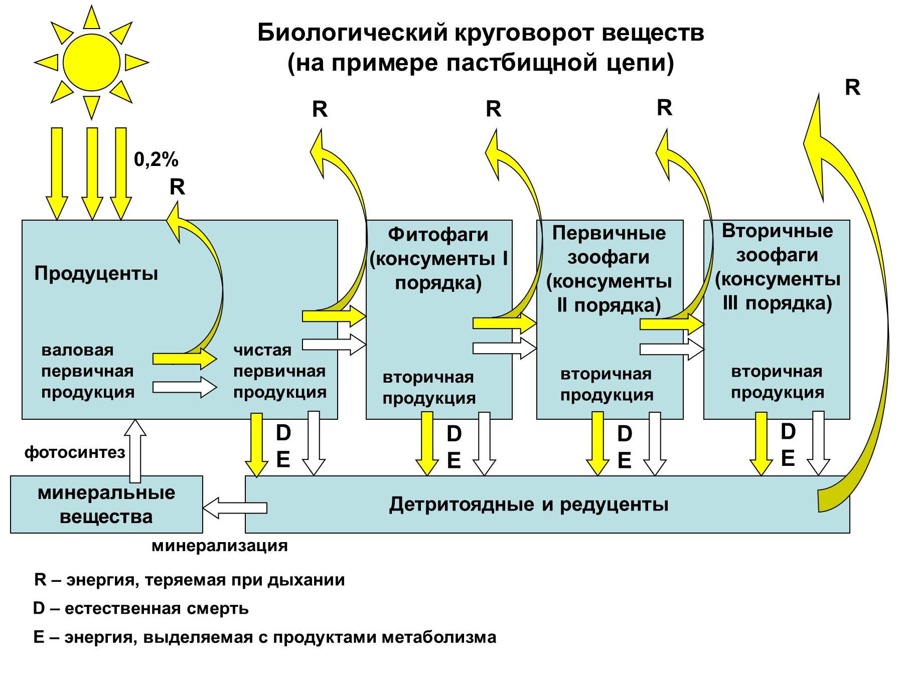 Практическая работа составление схем передачи веществ и энергии 11 класс