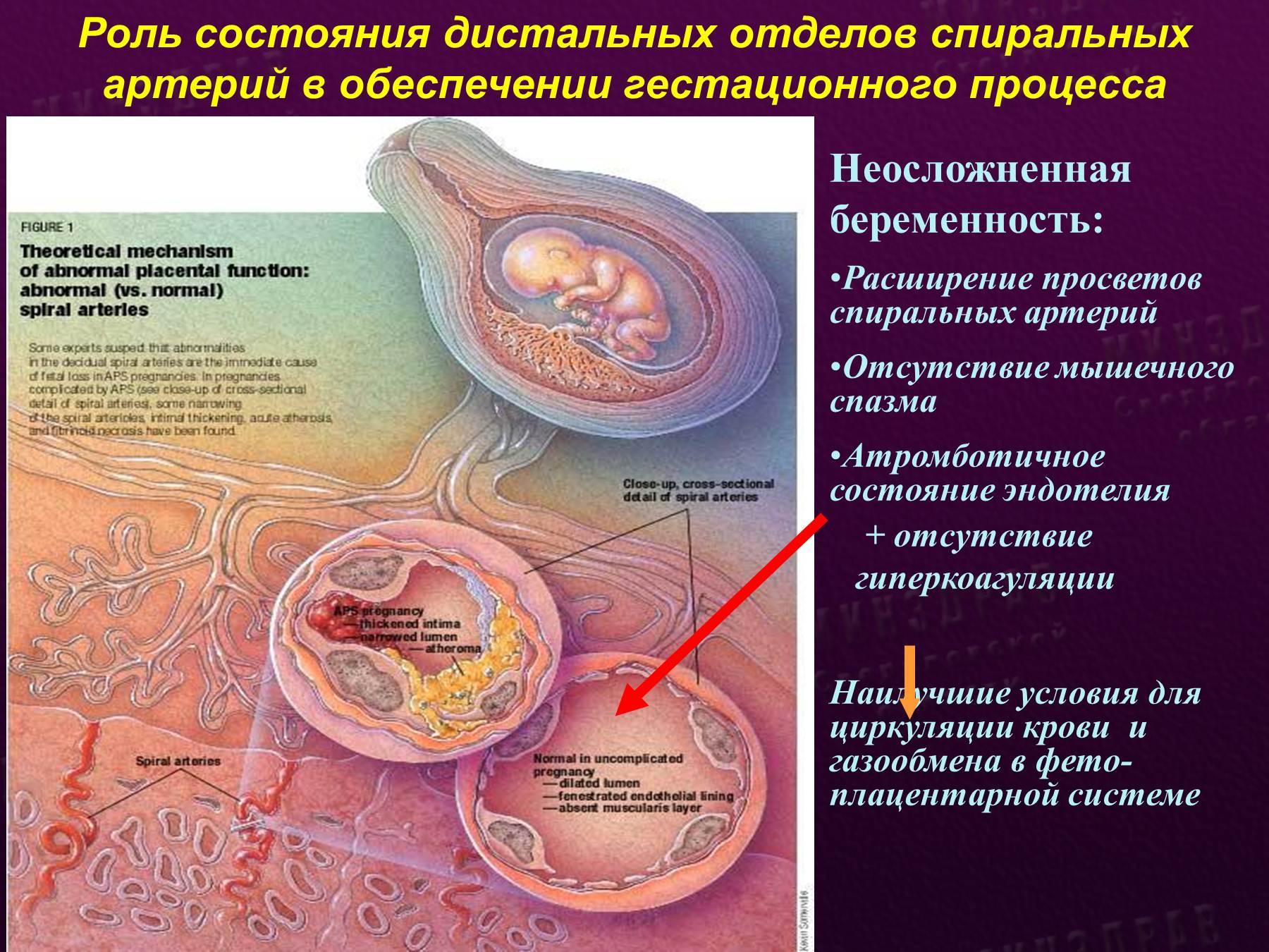 Гестозы беременных лекция по акушерству