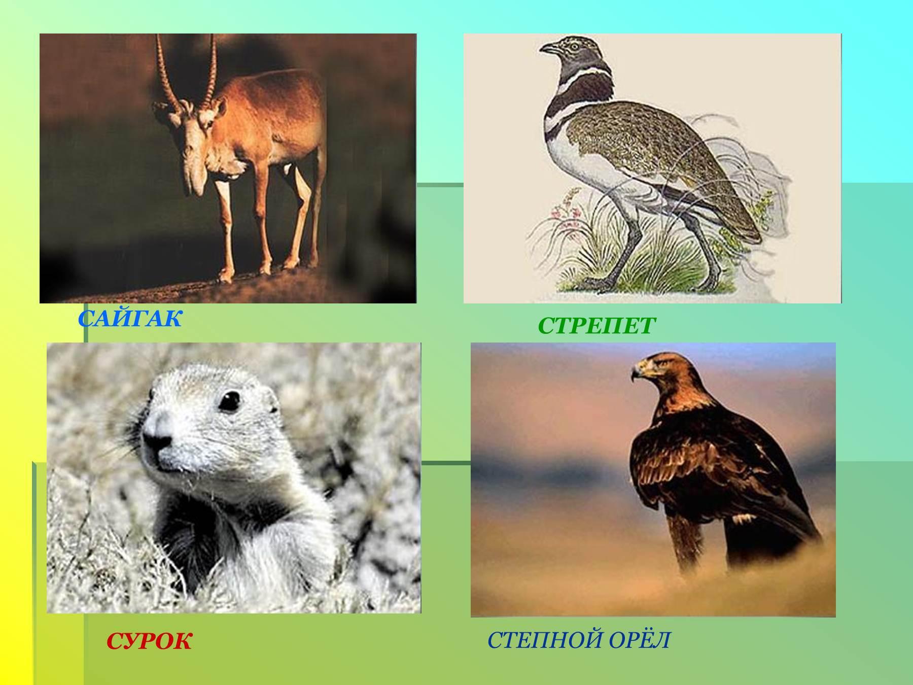 Животные и растения степи картинки 7