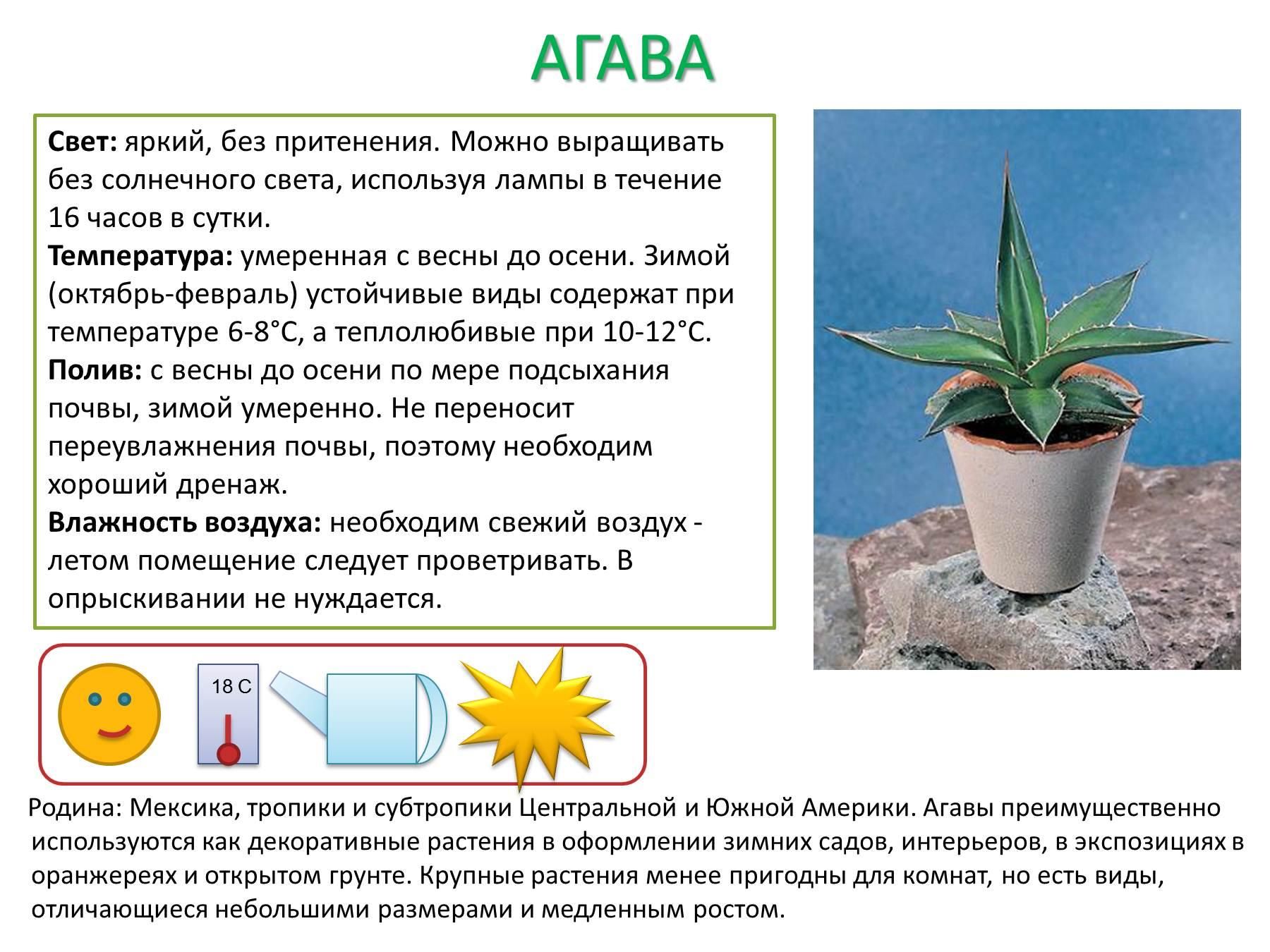 Схема и описание комнатных растений