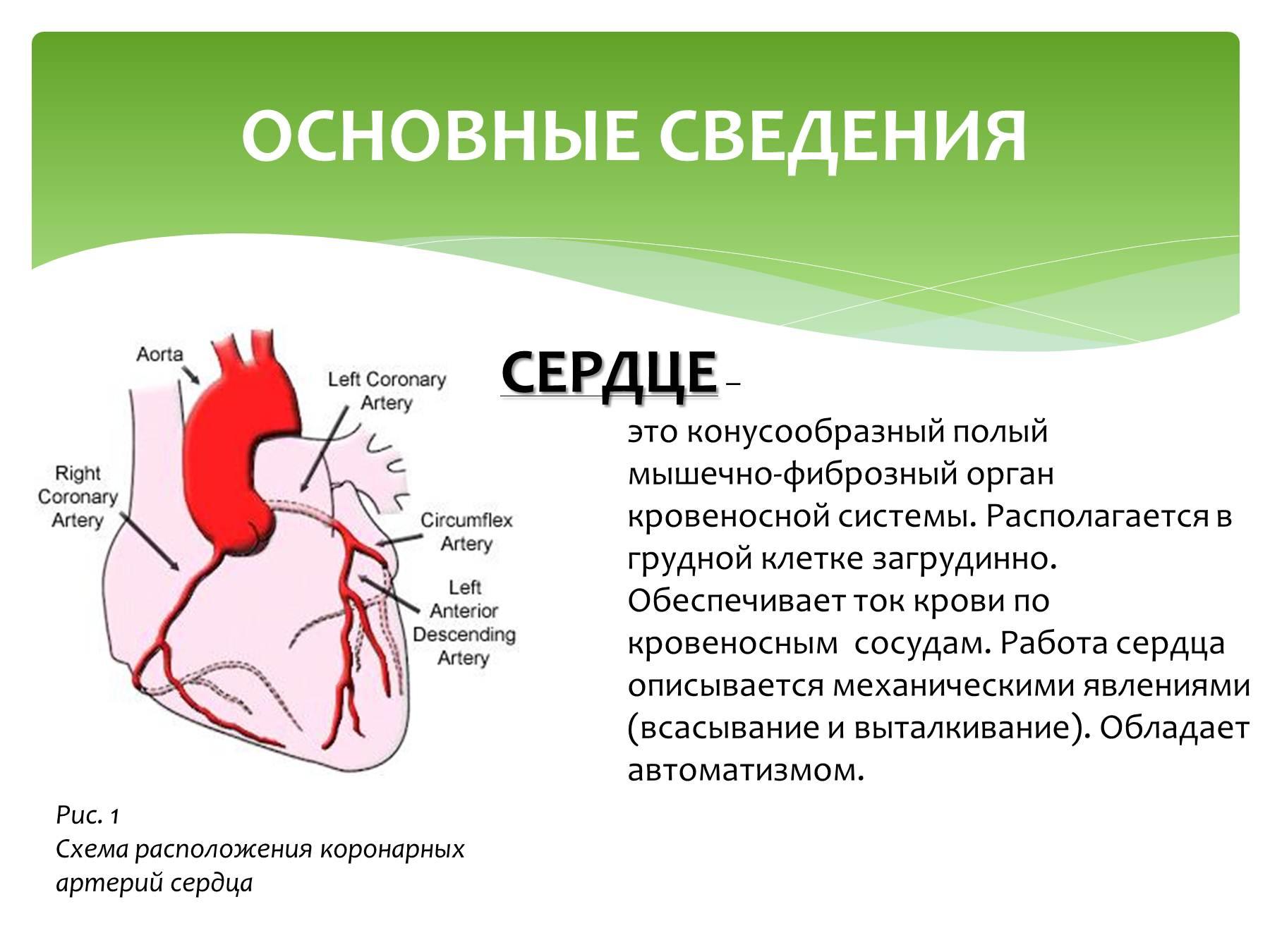 Профилактика болезней органов дыхания презентация — pic 14