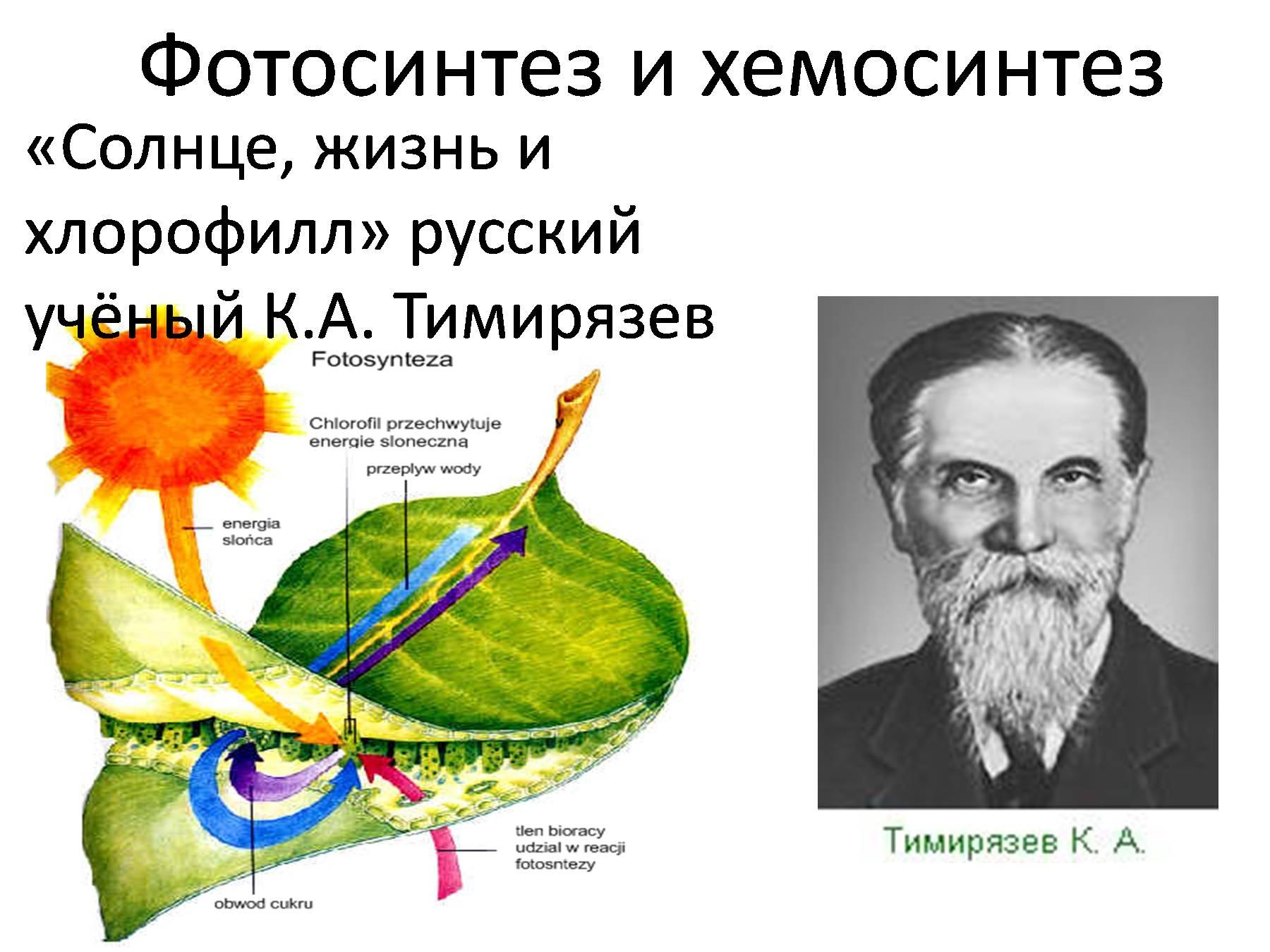 доклад фотосинтез и хемосинтез хозяину хочется
