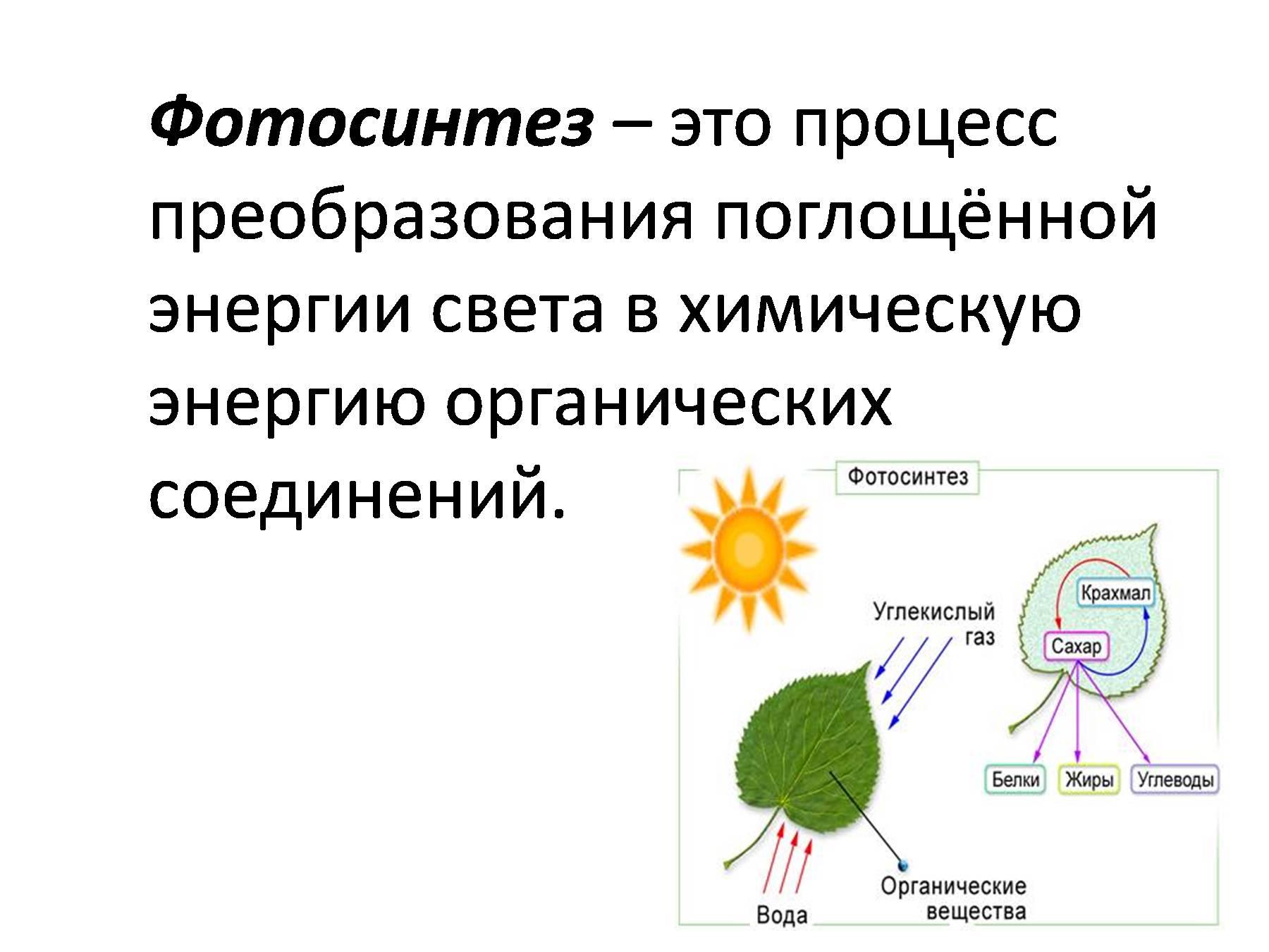 все о фотосинтезе растений это может