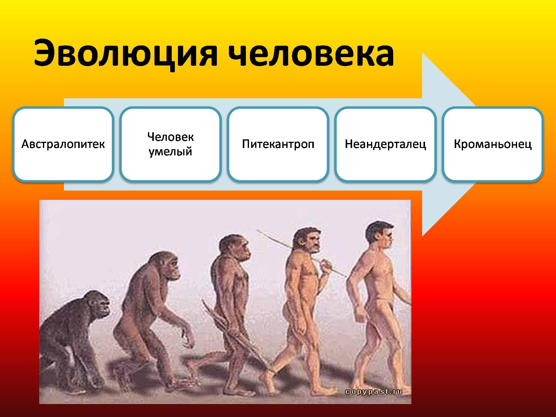 картинки этапов эволюции человека энергию
