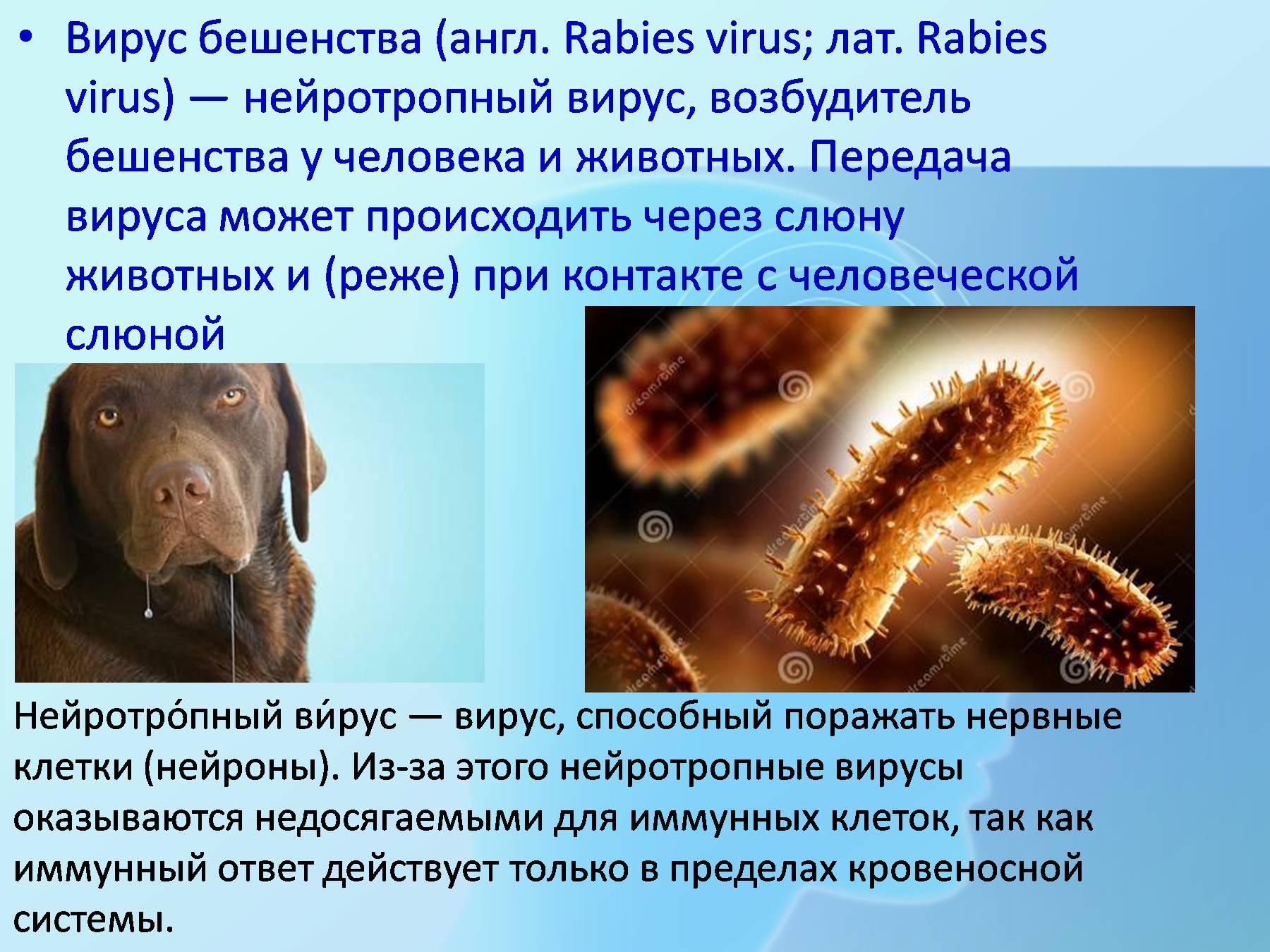 Картинка вируса бешенства