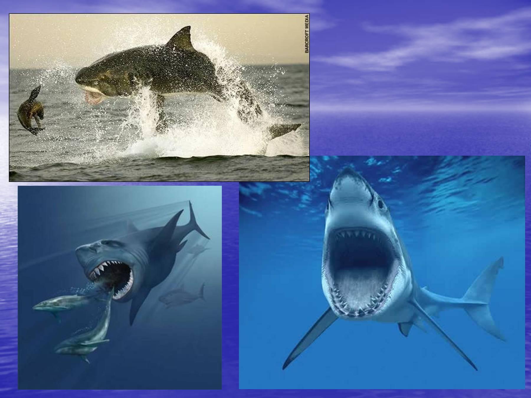 дин презентация картинок про акул может