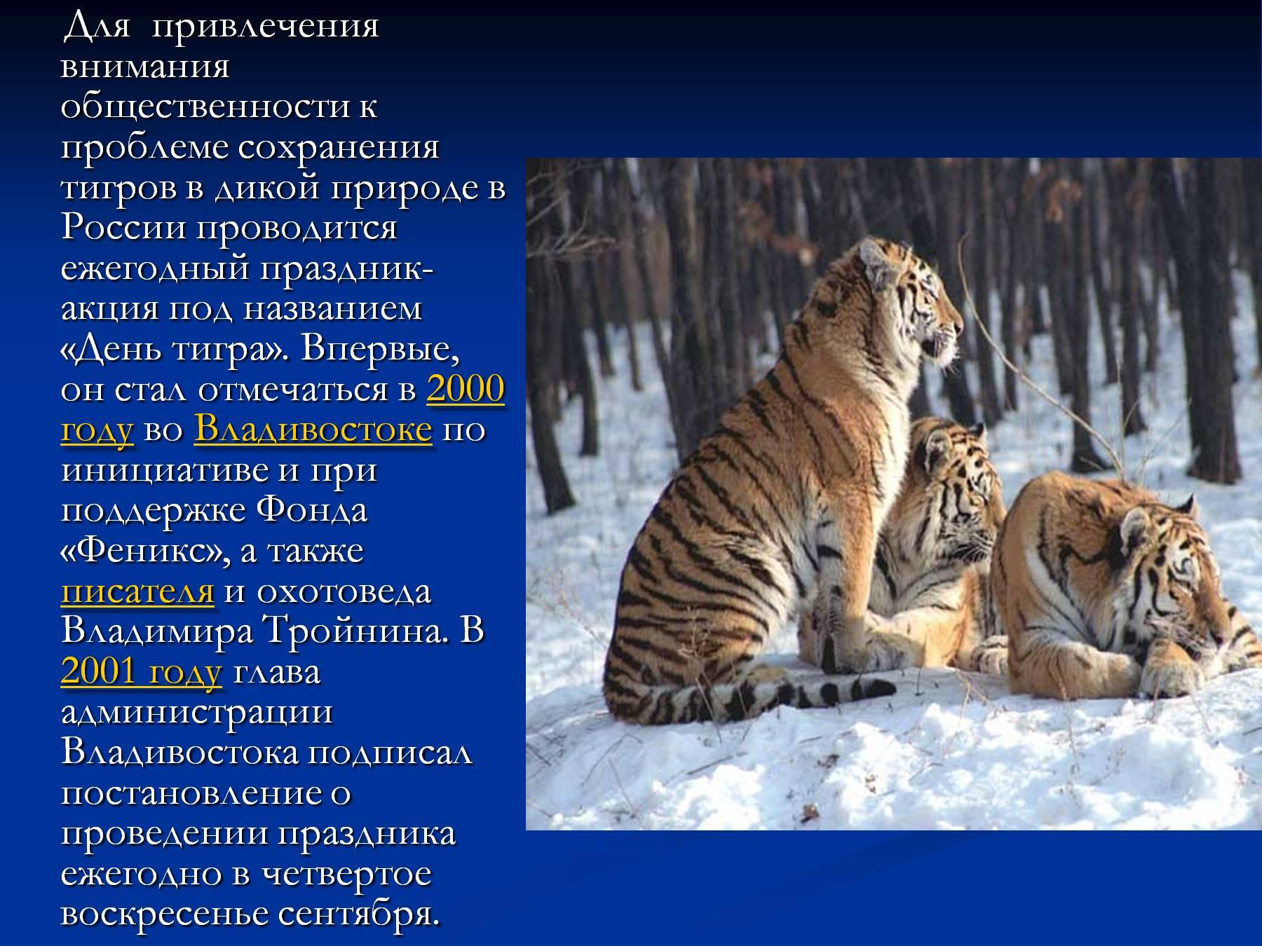 Картинка в презентацию амурский тигр