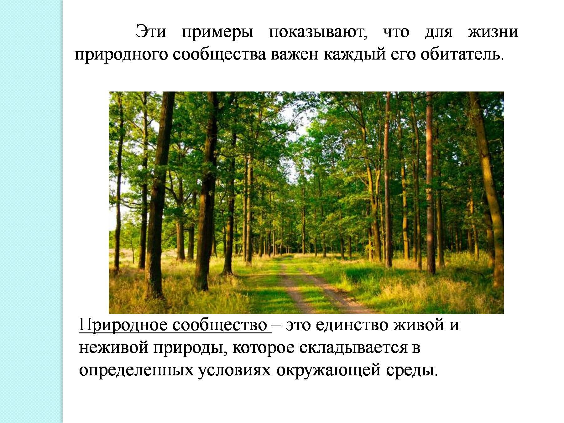 как называется место занимаемое природным сообществом