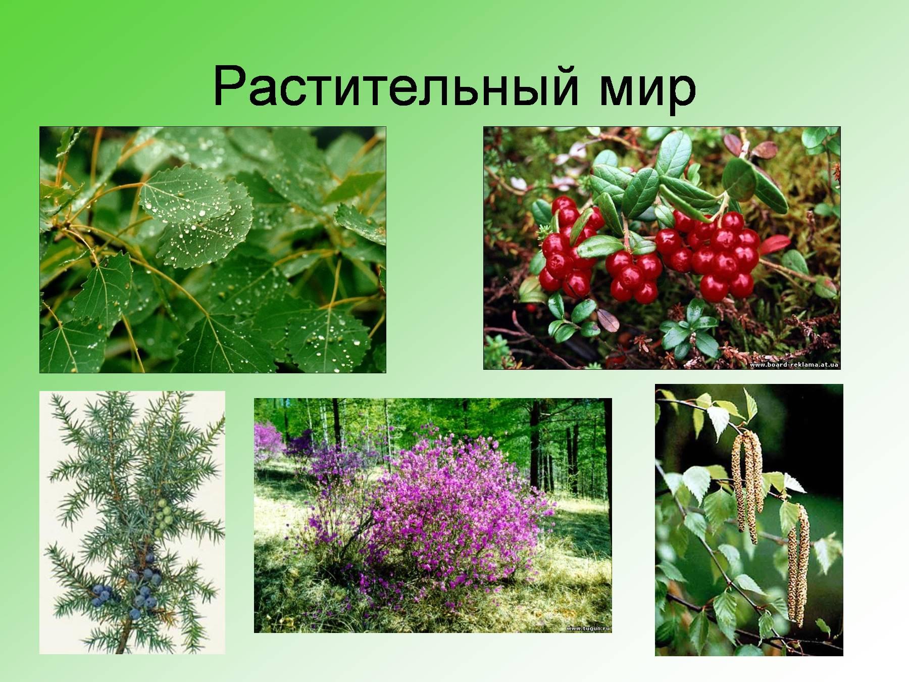 Картинки растения в тайге